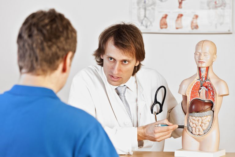 Doctor showing male patient a model of the abdomen