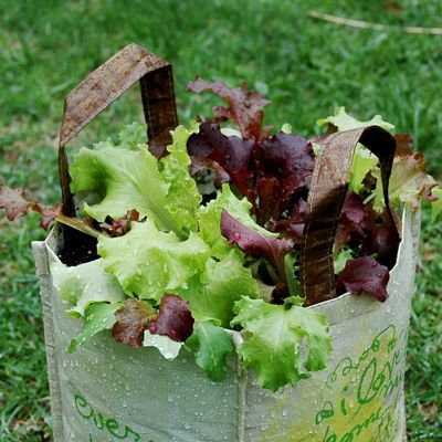 container gardening picture of finished vegetable container garden with lettuce