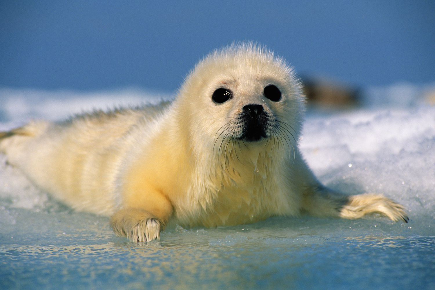 10 Facts About Seals and Sea Lions