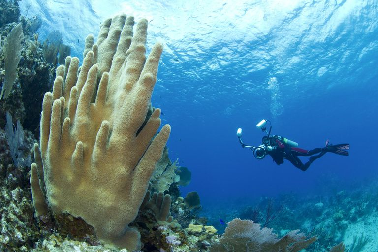 Underwater Photographer and Hard Coral