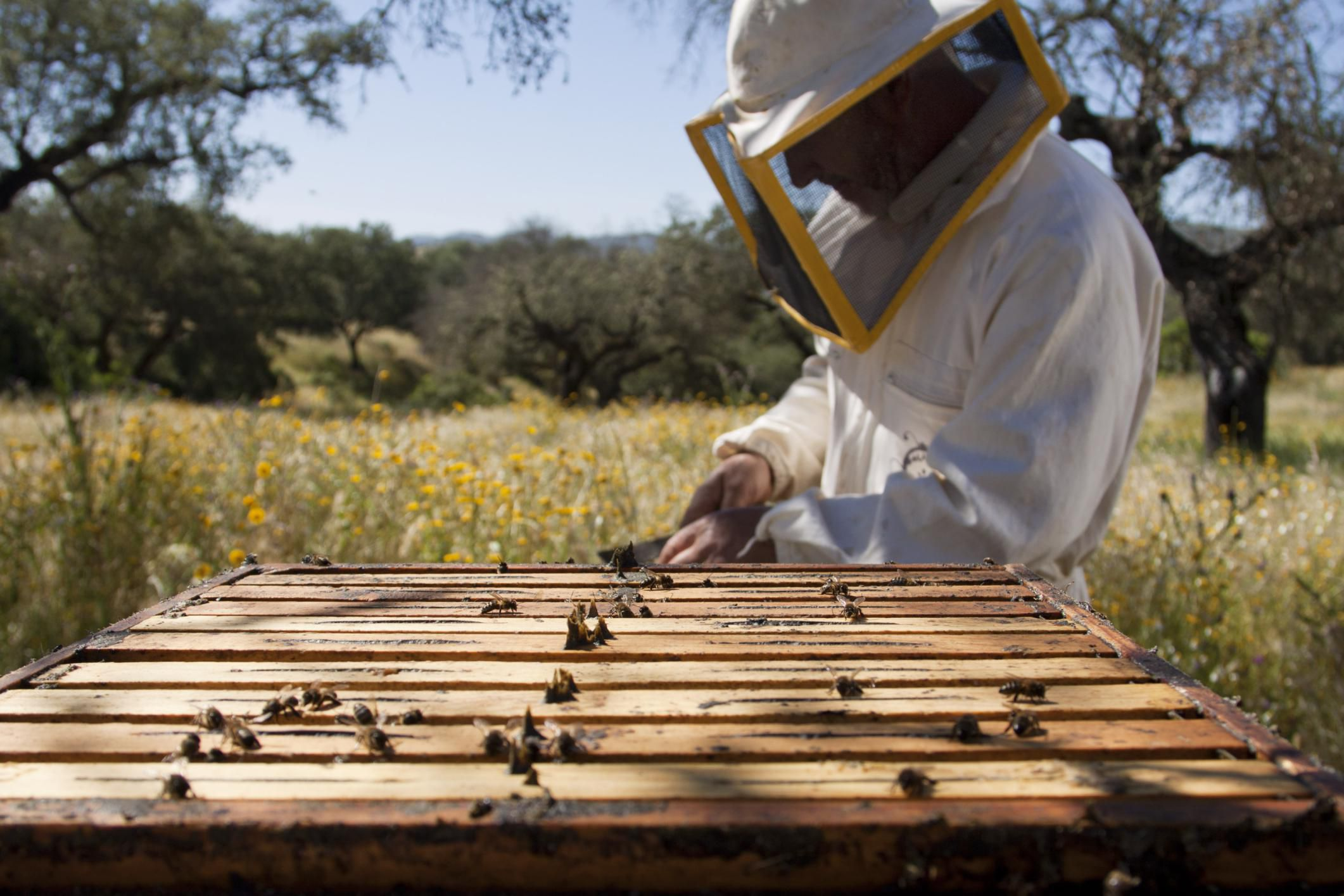 How to requeen a honey bee hive how to keep up with your beekeeping tasks by season biocorpaavc