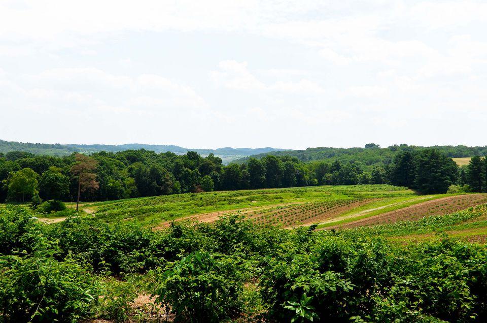 Paskorz Berry Farm in Pennsylvania.