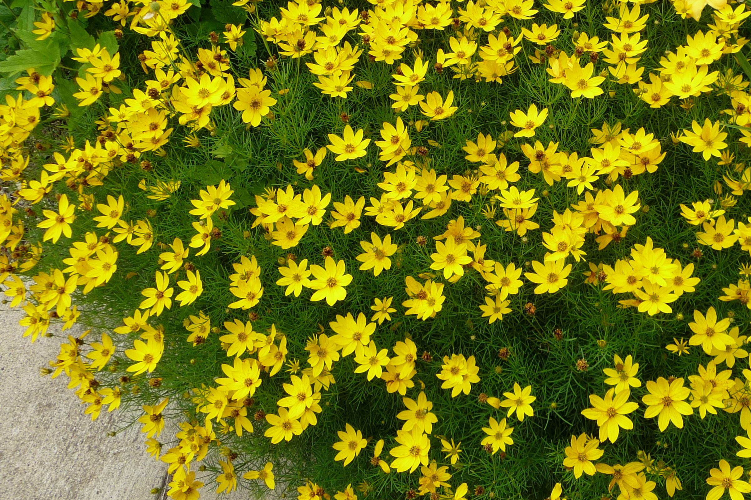 Perennial flowers that bloom all summer izmirmasajfo Image collections