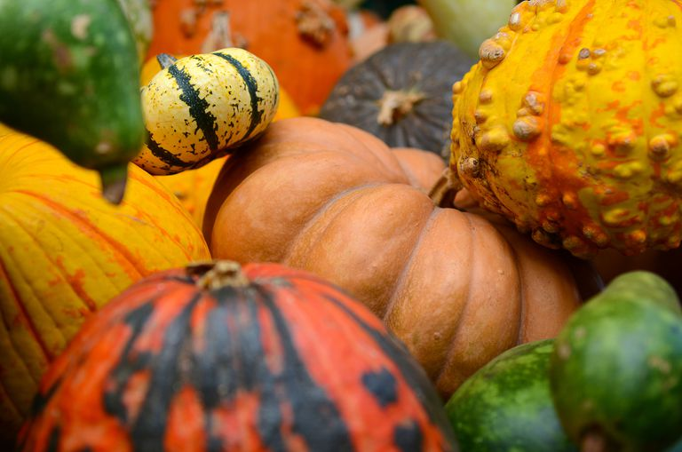 A colorful variety of pumpkins.