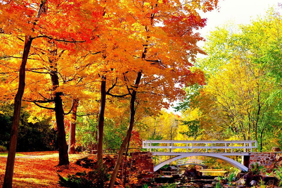 enjoy fall colors to the fullest at these montreal fall foliage hot spots