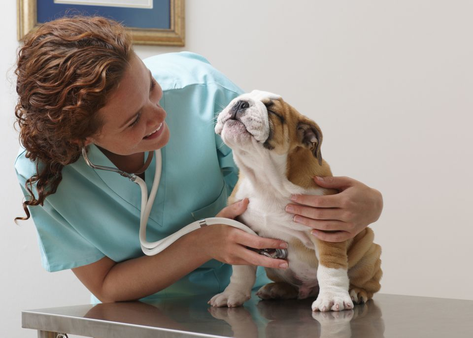 What Happens During A Veterinary Physical Exam