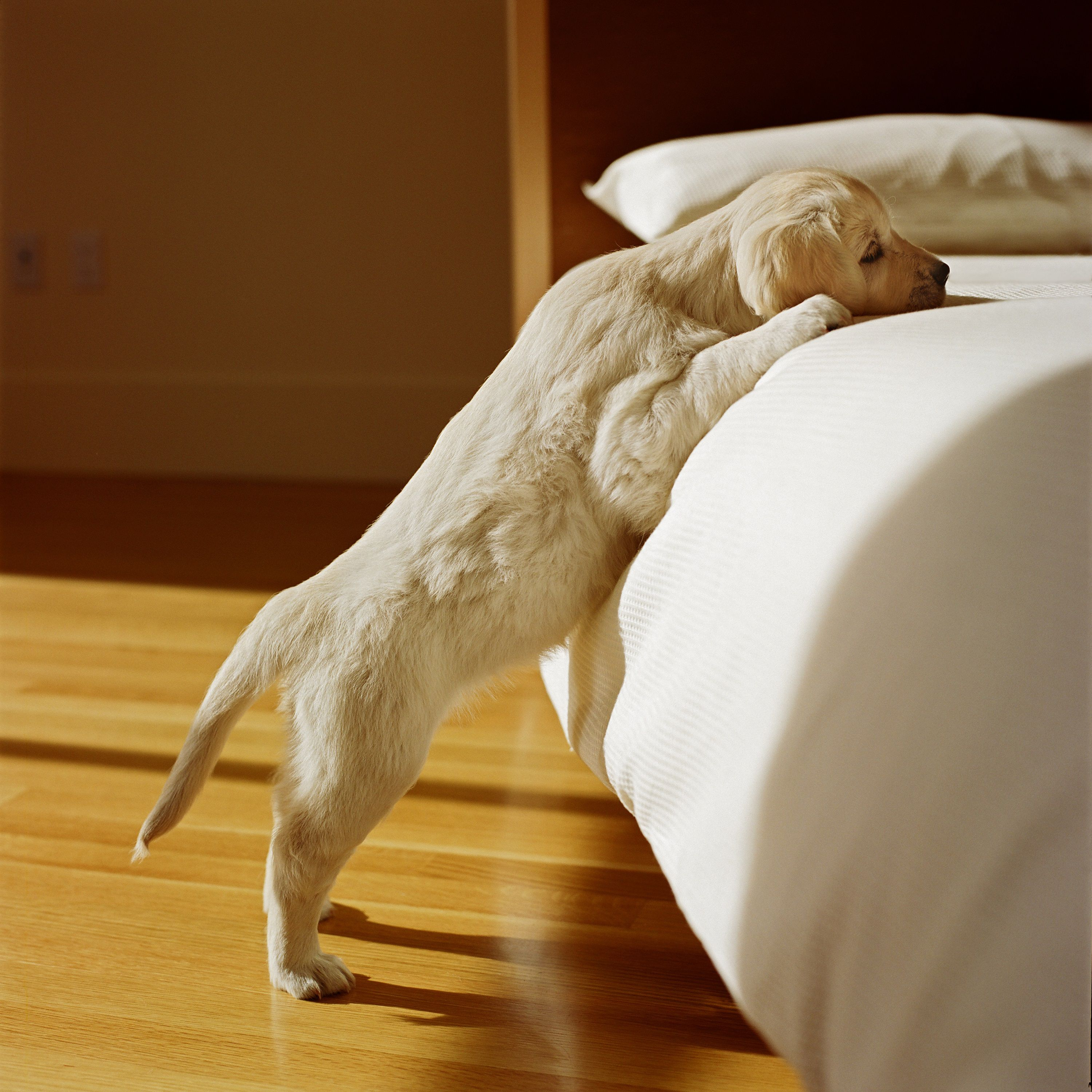 Symptoms Of Natural Gas Poisoning In Dogs