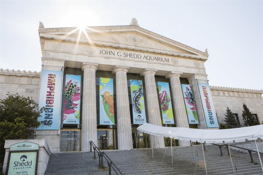 Guide to Chicago's Shedd Aquarium