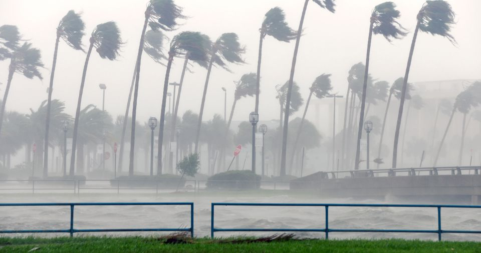 Palm trees sway in rain and fog, western eye wall of Hurricane Matthew