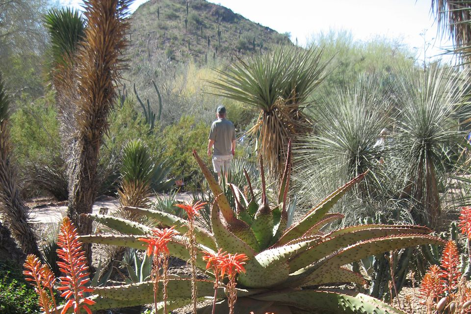 What To Do On New Year 39 S Day In Phoenix