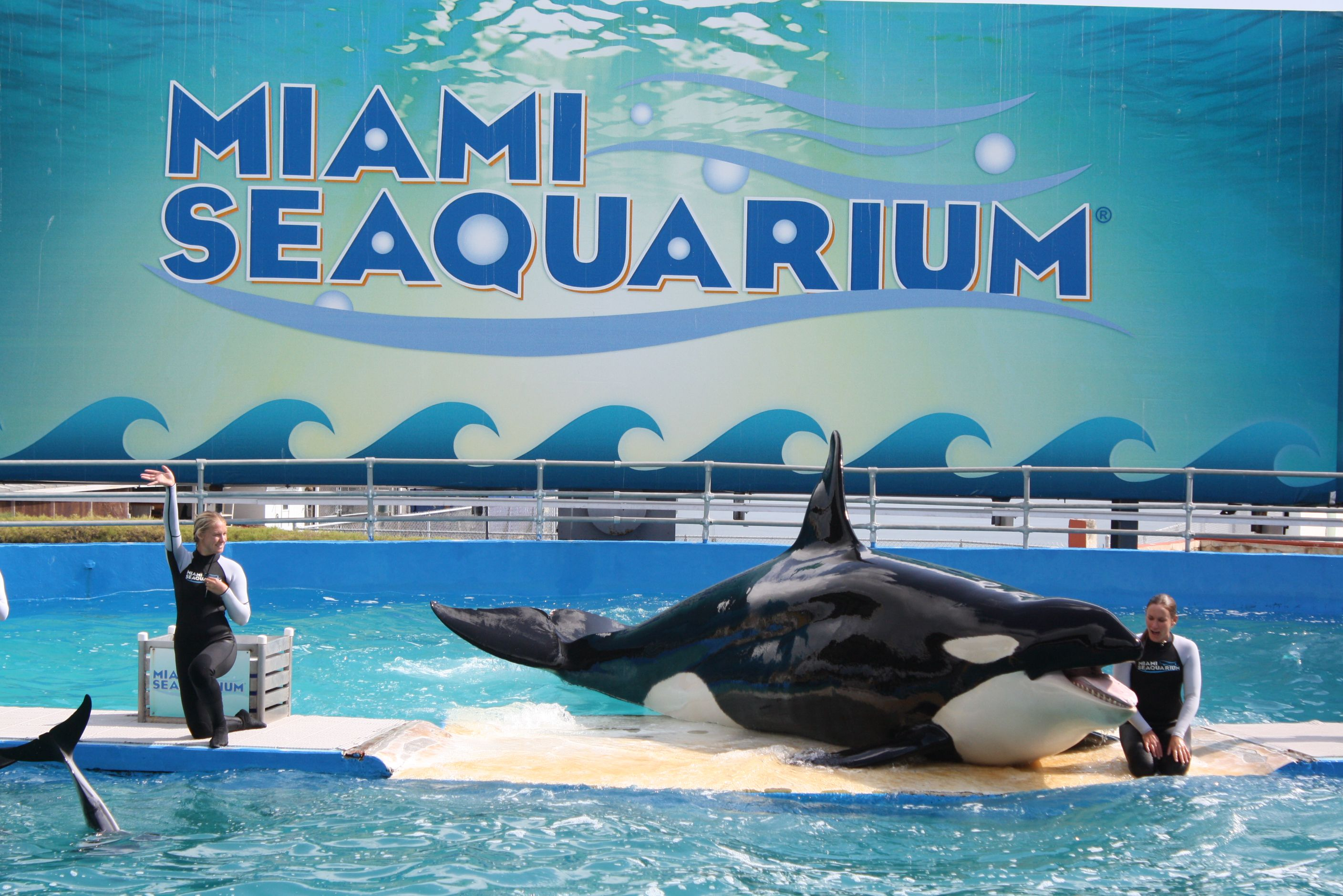 Miami Seaquarium Visitor Information And Review