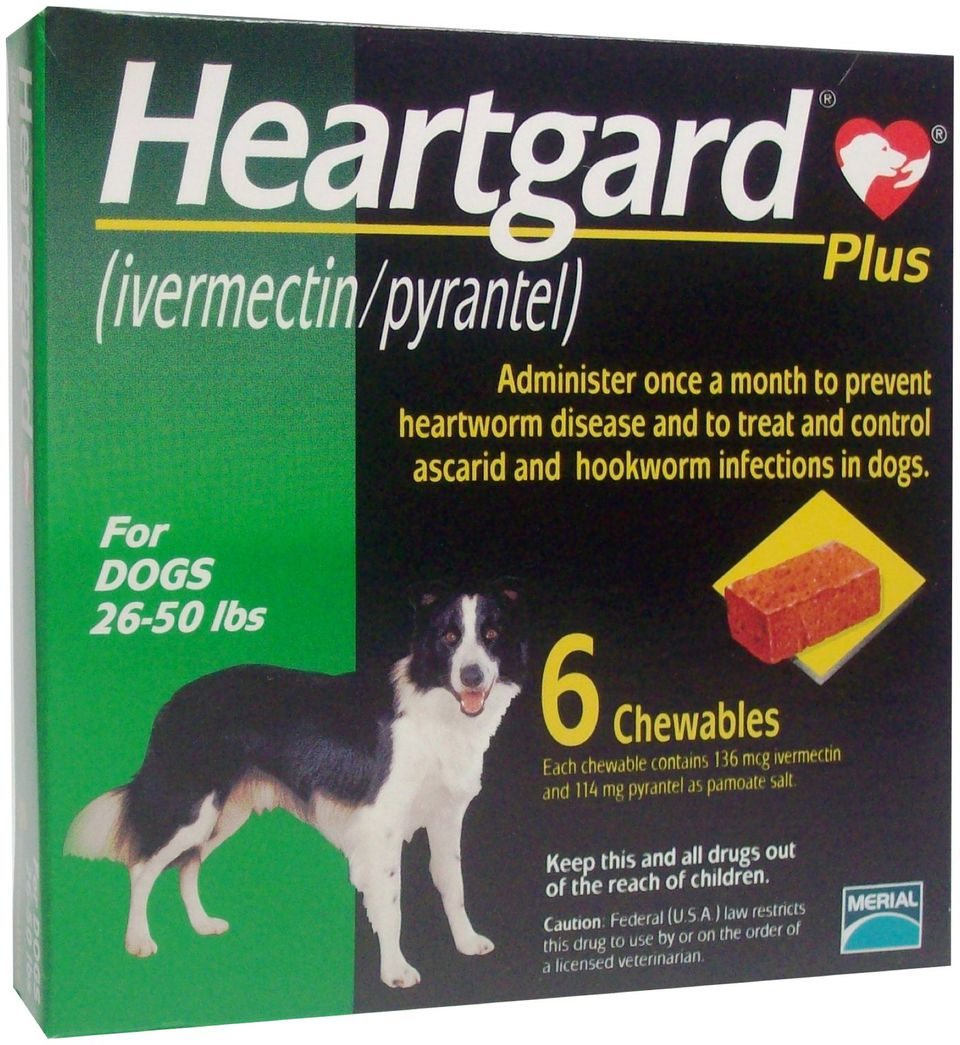 Signs Of Heartworms In Older Dogs Natural Remedies