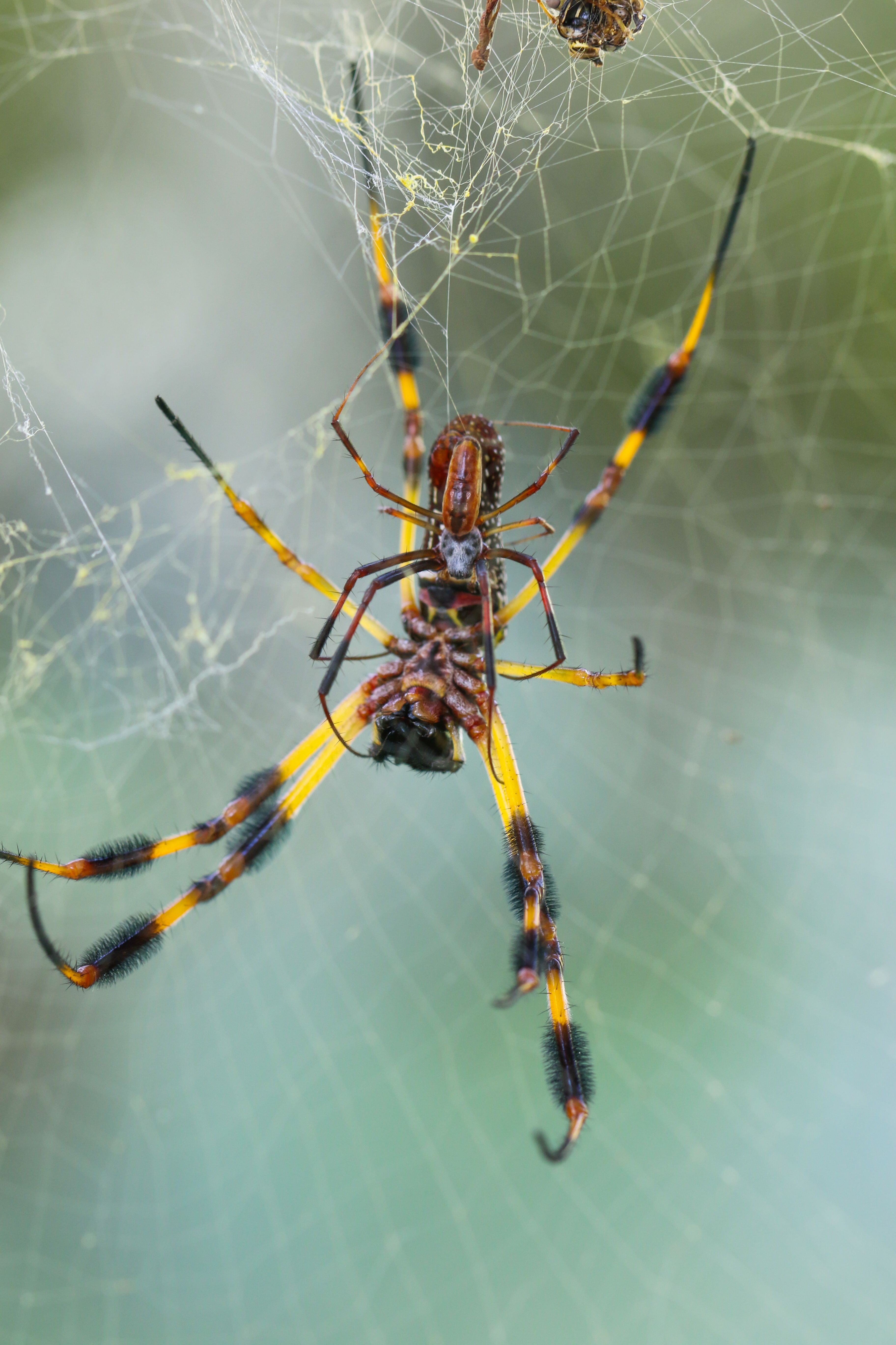 why spiders decorate their webs u2013 spider web decorations