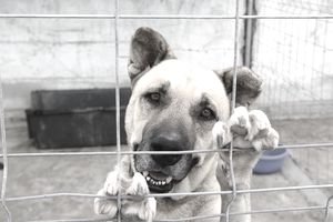 Dog with paws on a fence in an animal shelter