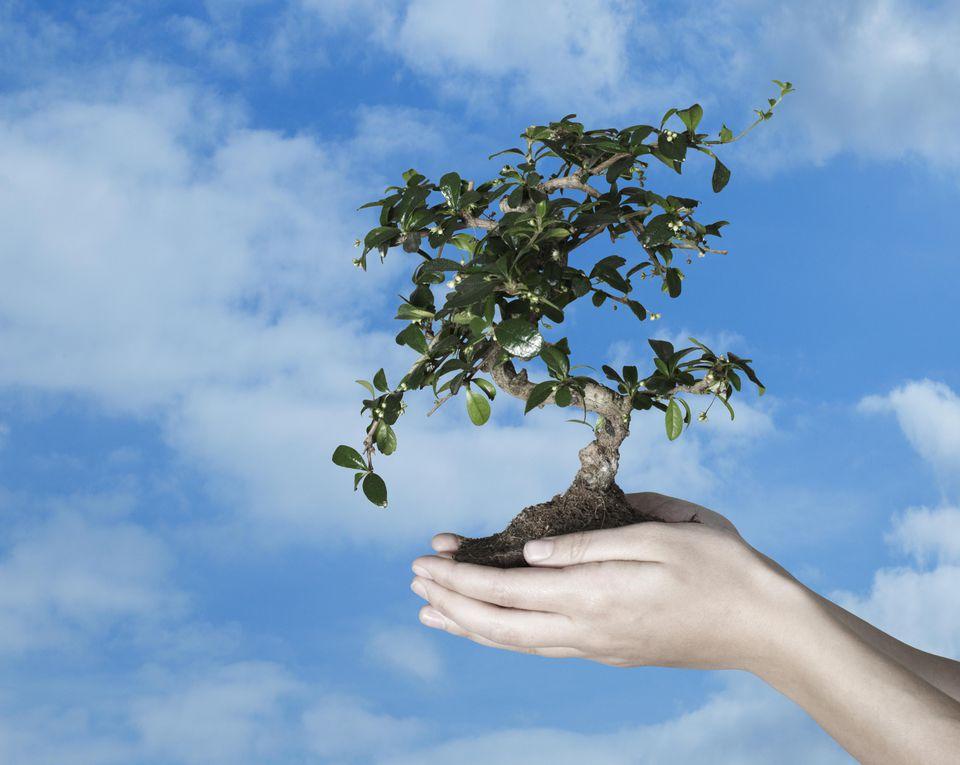 Hands holding bonsai tree