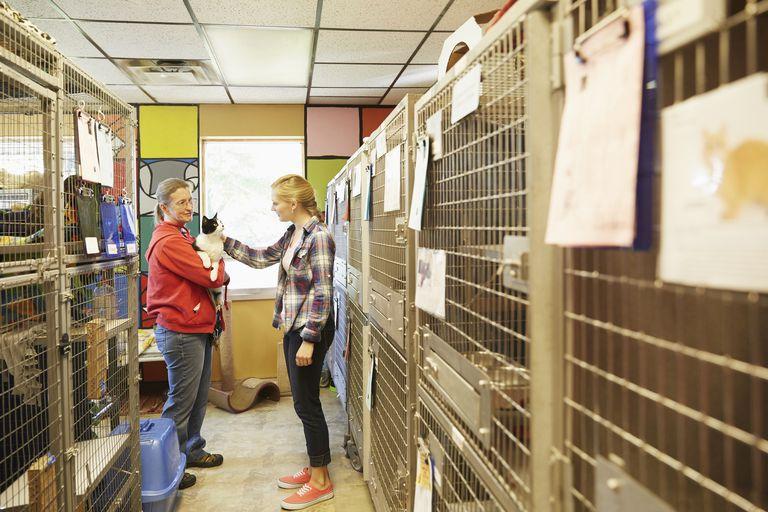 Animal shelter manager