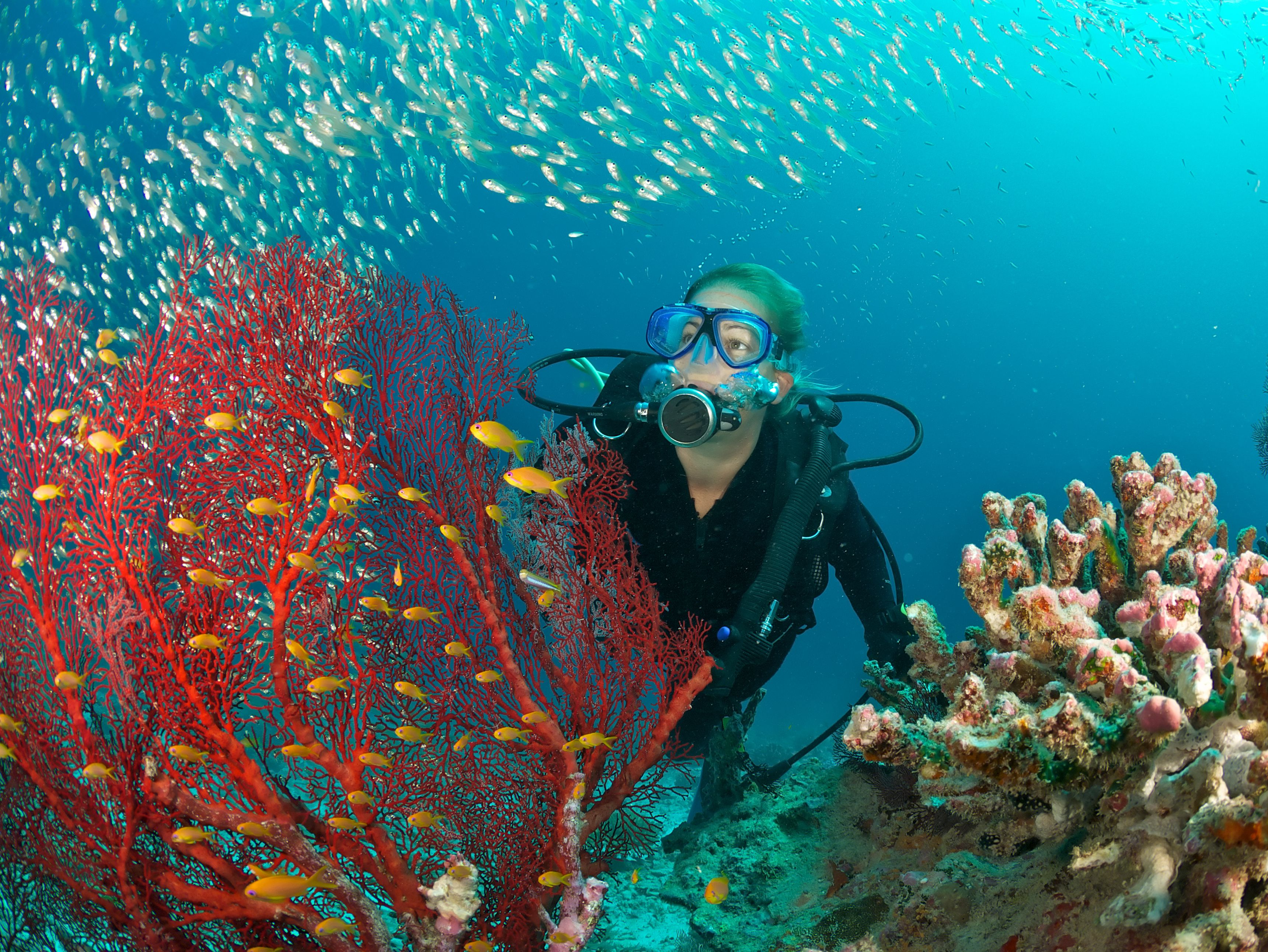 Scuba diving when you have asthma - Dive in scuba ...