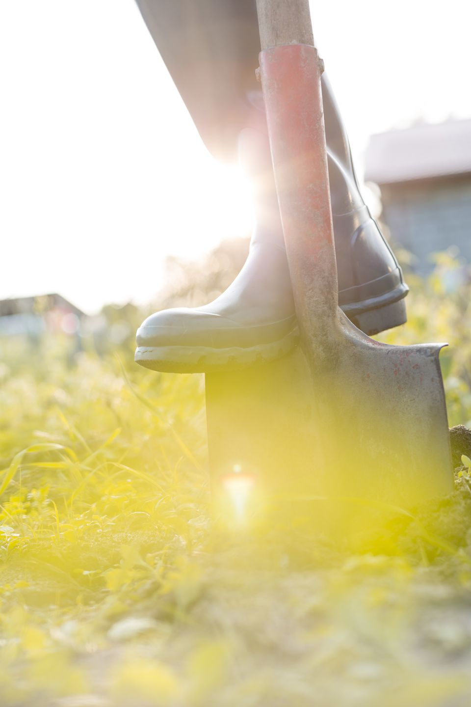 Close up of mans boot on shovel in sunny garden