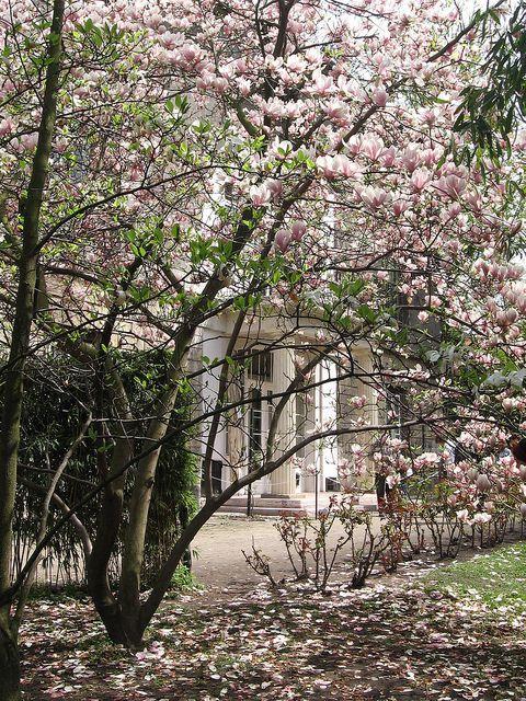 Springtime in Budapest