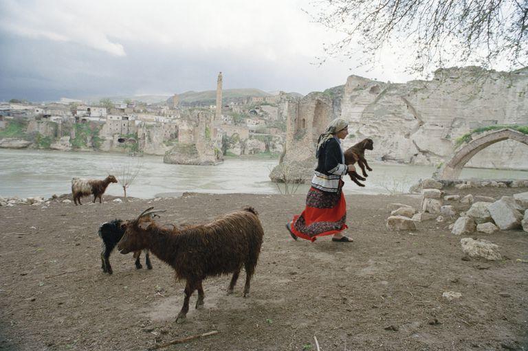 Turkish Shepherd