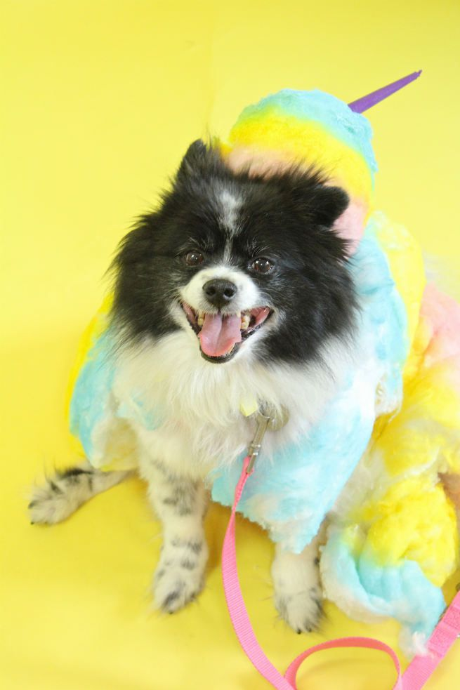DIY Cotton Candy Costume For Dogs