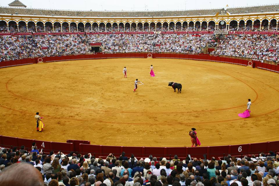 Bull fighting in Spain