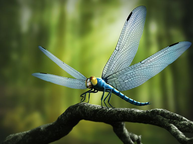Artist rendition of ancient griffenfly.