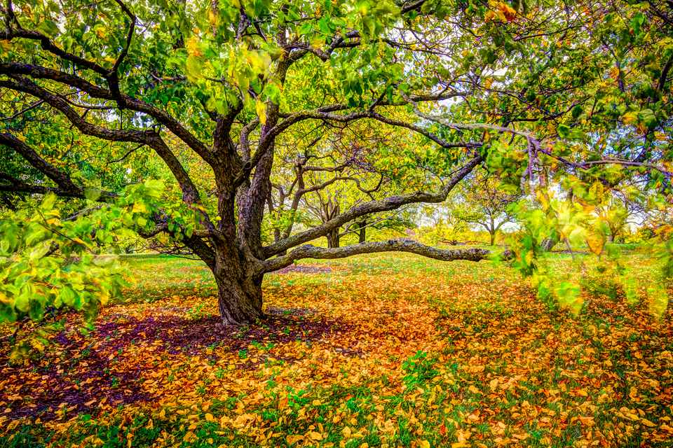Fall Color at Arboretum