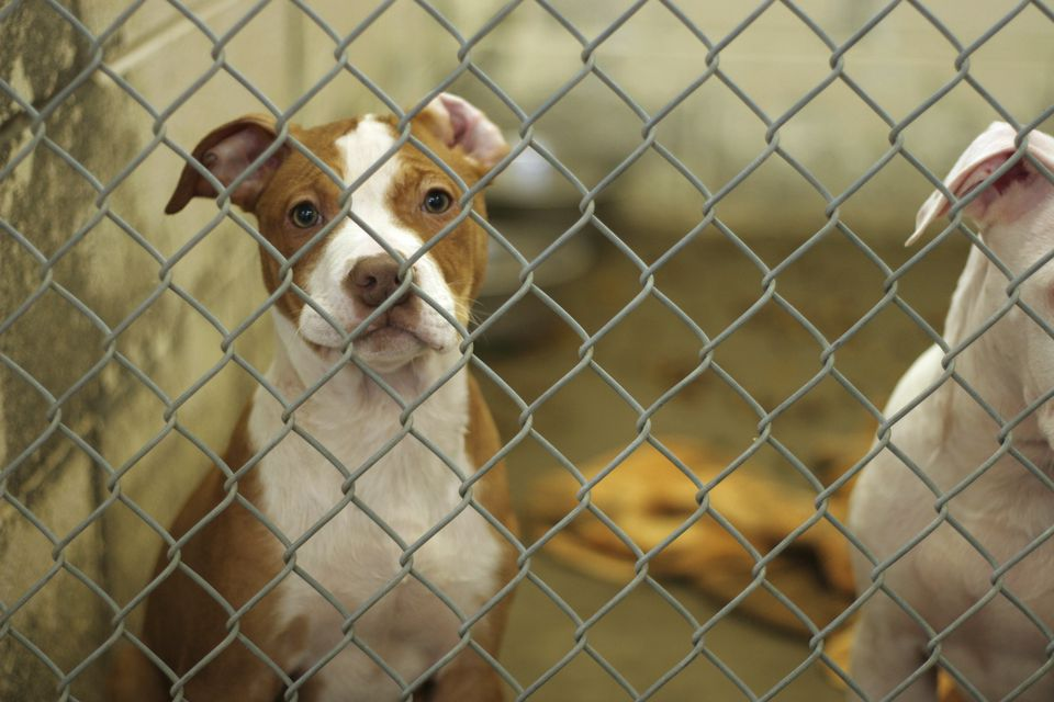 homeless dogs in animal shelter need help