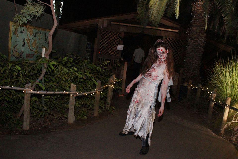 Halloween at Phoenix Zoo