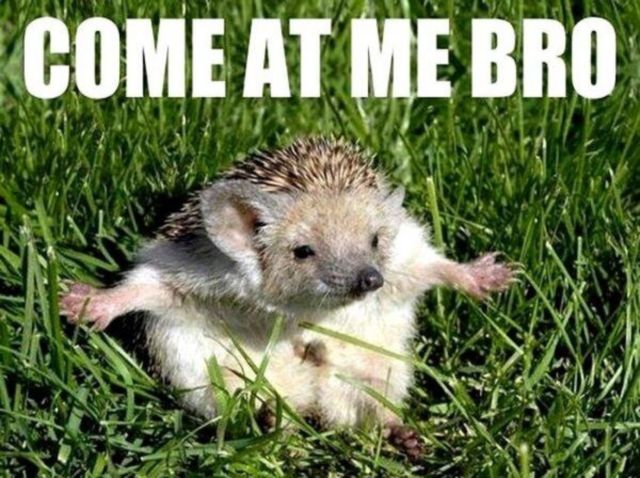 Funny Memes For Animals : Funny animals with captions free hd wallpaper funnypicture