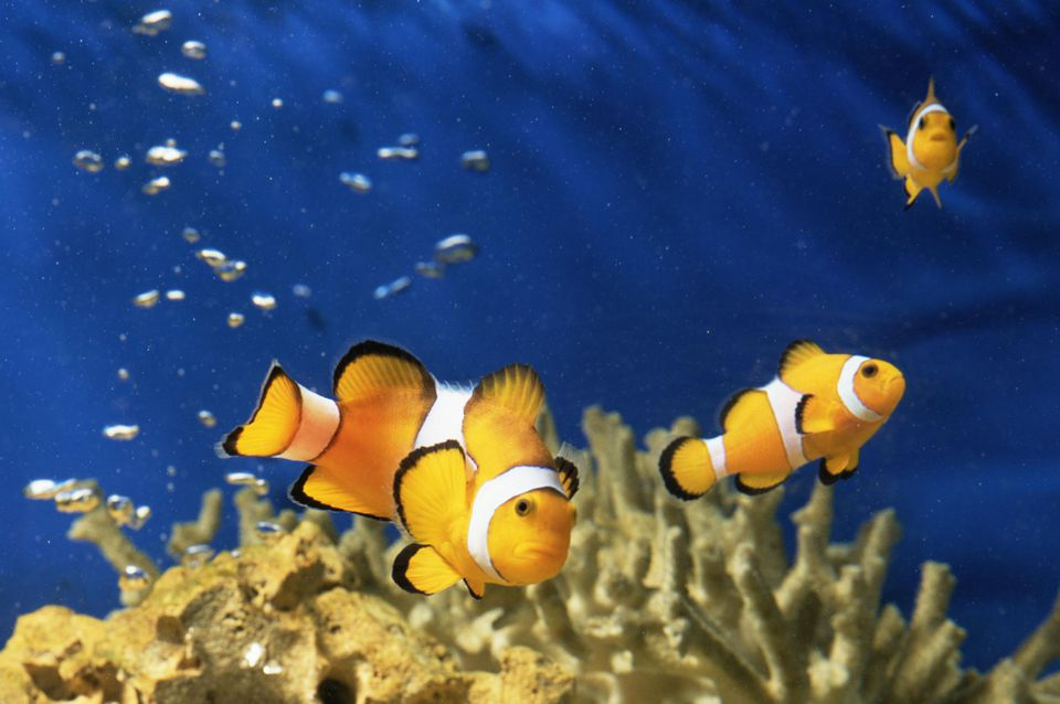 Fish in s saltwater aquarium