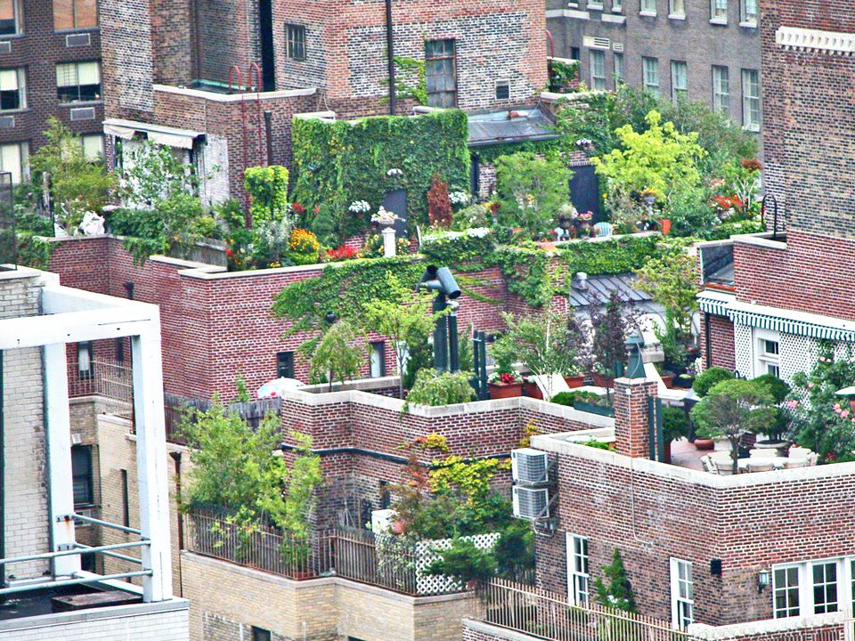 What To Consider Before Planting A Rooftop Garden - Rooftop landscaping