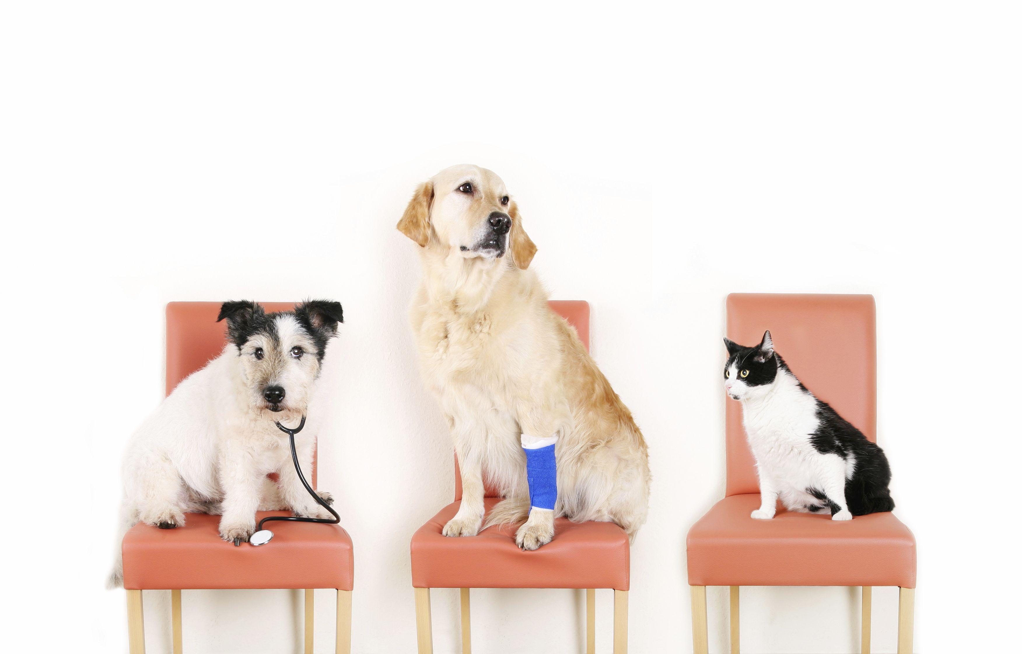 Lasix Medication For Cats
