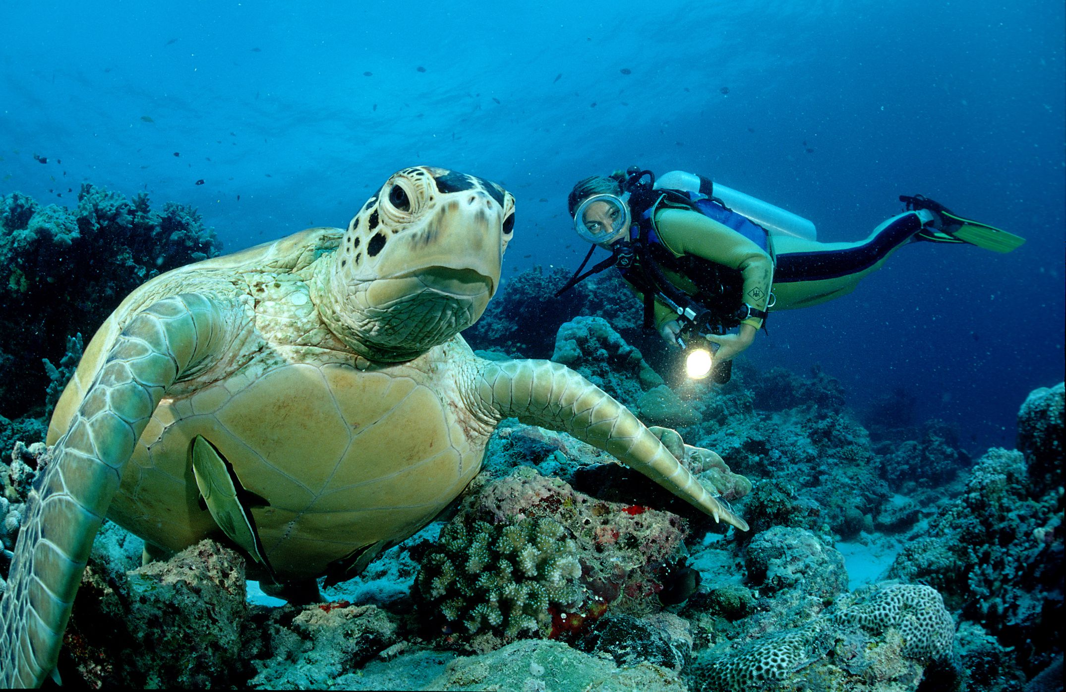 8 Amazing Places To Enjoy Diving In Sabah Borneo