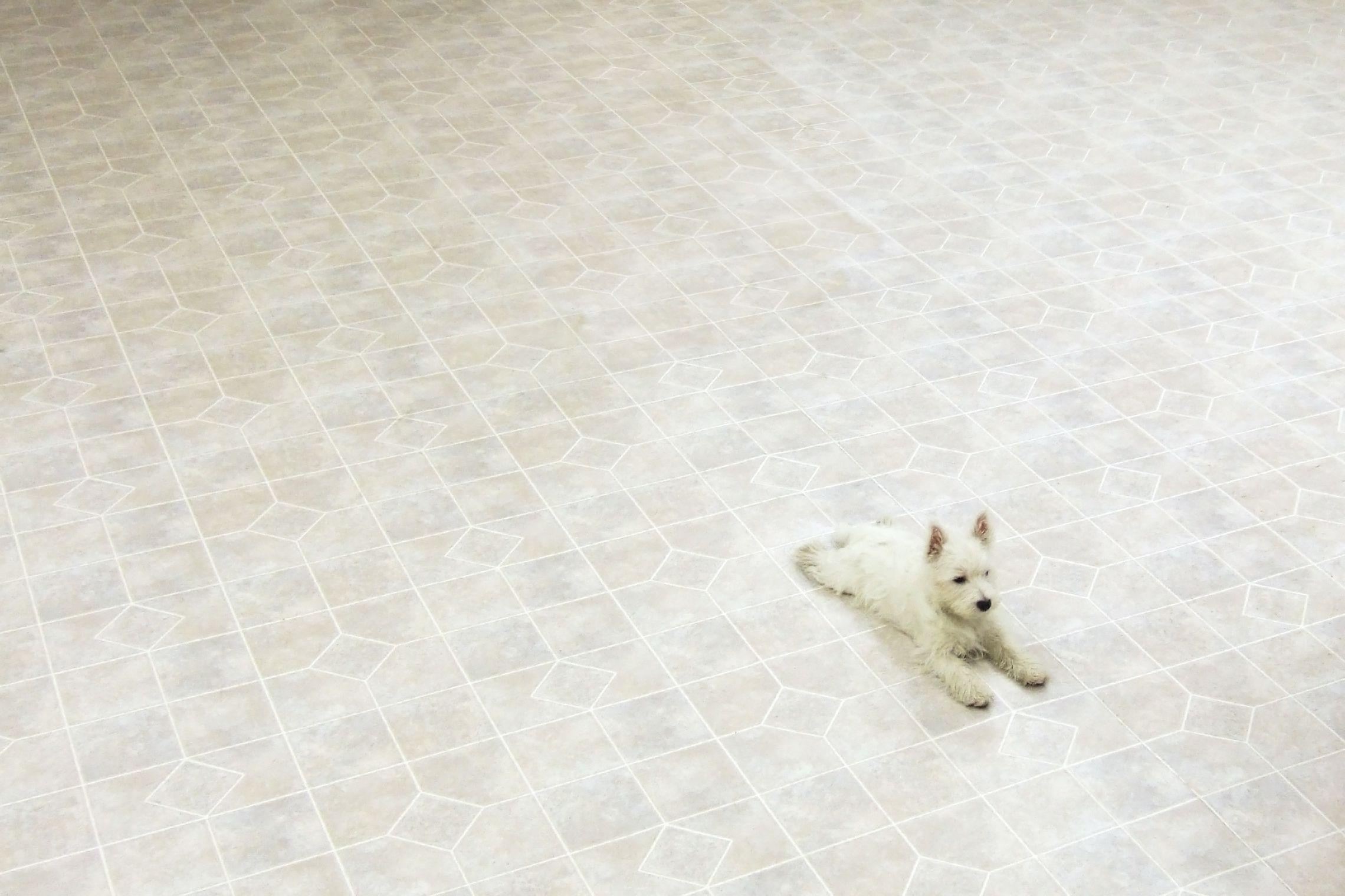 vinyl floor floors home flooring ideas modernize linoleum vs