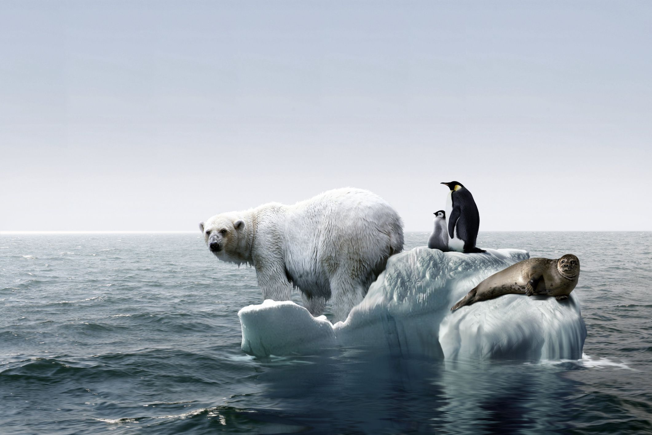 Global warming and its effect on marine populations how does global warming affect wildlife sciox Gallery
