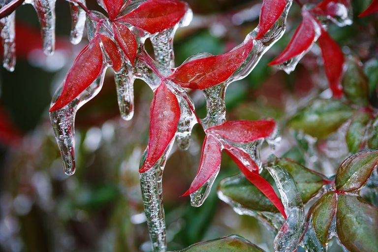 freezing rain icicles