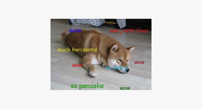 "Shiba Inu lying on the floor thinking ""wow, merj with floor, much horizontal, no enerji, so pancake"""