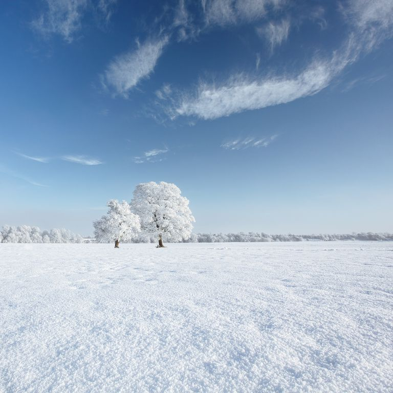Ireland, Meath, Trim, Trees in snow