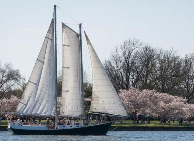 Washington DC Cruises (A Complete Guide To Boat Tours