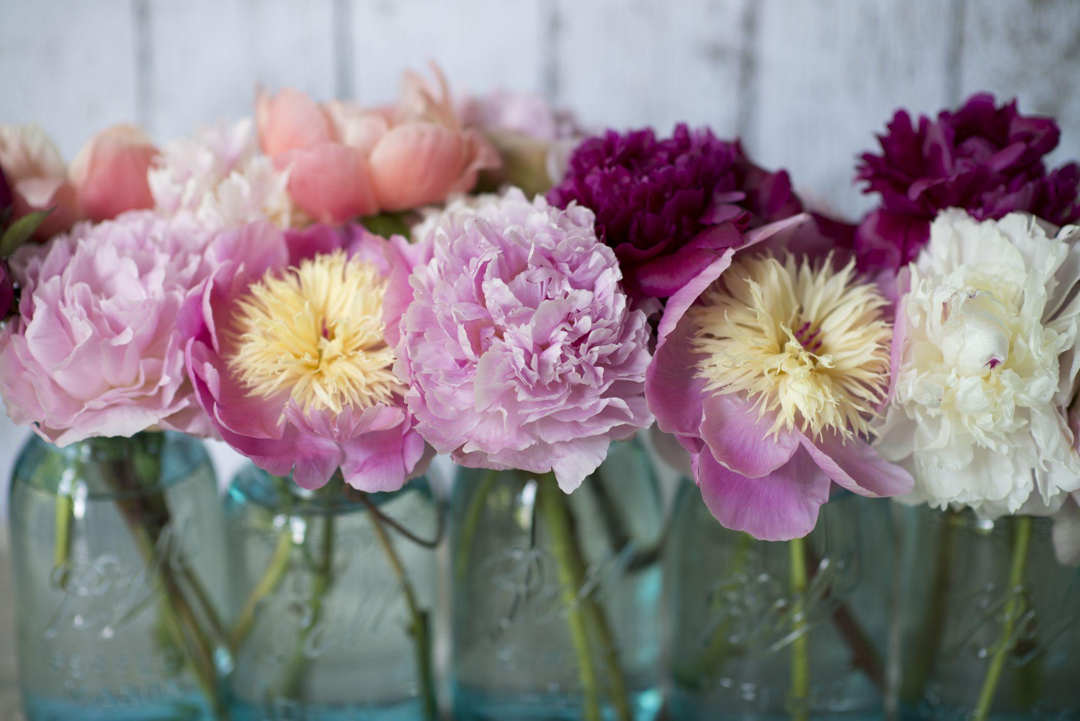 13 Beautiful Peony Varieties