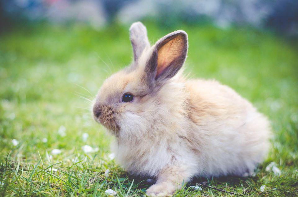 Rabbit sitting on grass