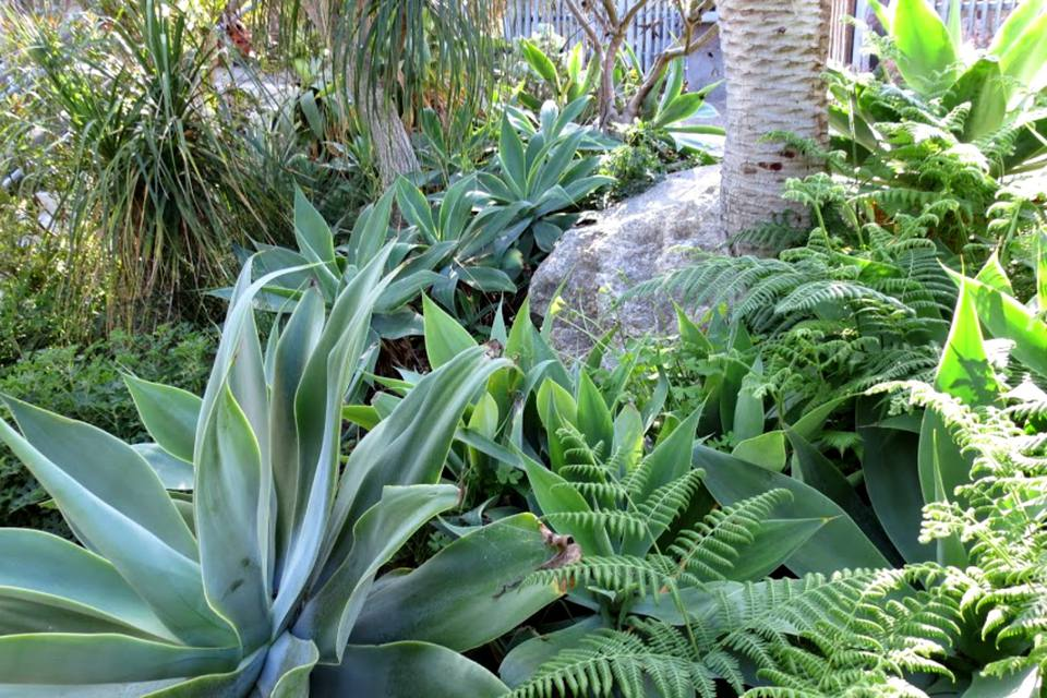 succulents and ferns