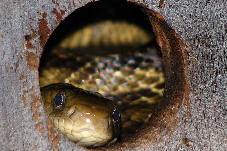 Snake in a Bird House