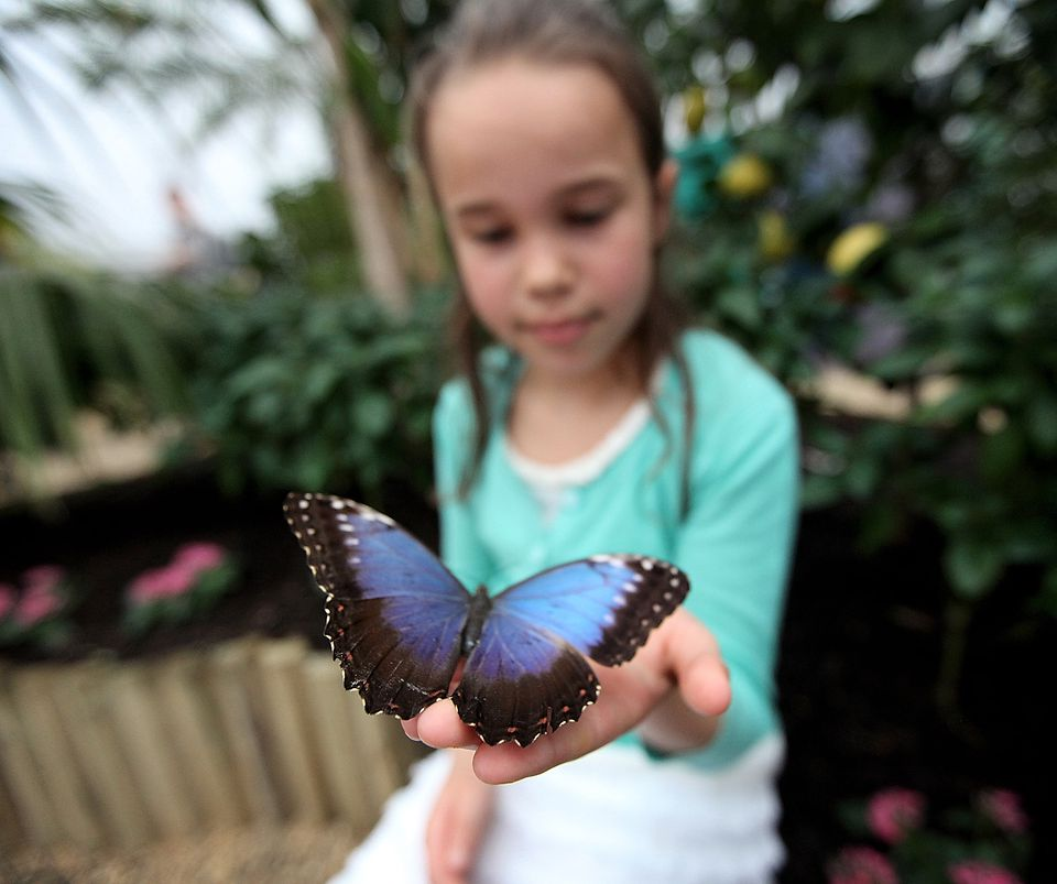 Montreal spring events 2018: festivals to see include the Botanical Garden's Butterflies Go Free.