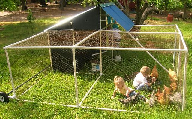 portable poultry pen by pvc plans kids and chickens in a chicken coop - Chicken Coop Design Ideas