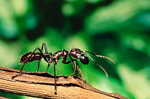 Learn About All Kinds of Ants - Introduction Queen Ant Laying Eggs
