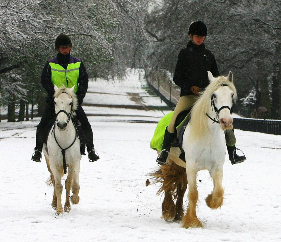 Girls riding white horses along snowy lane.