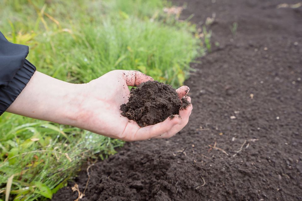Do it yourself soil ph test for Soil yourself